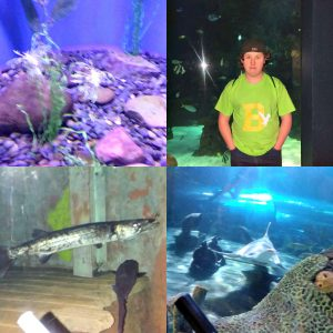 Ripley's Aquarium of the Smokies  Review